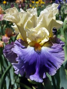 Welcome to Garden' 2019 Bloom Season! Our online shop is open to take your orders! More than 400 varieties of Tall Bearded Iris await you this…