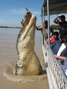 How big was the biggest crocodile in the world ever caught? What were the top 10 largest crocodiles ever caught in the world? The biggest crocodile was. Giant Animals, Stuffed Animals, Animals And Pets, Funny Animals, Cute Animals, Large Animals, Scary Animals, Crocodile Marin, Crocodile Dundee