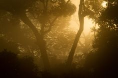 Sunrise Danum Valley Field Center Conservation Area Sabah Borneo Malaysia