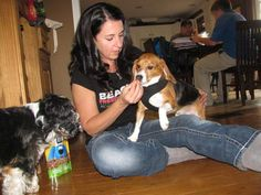 Beagle finds first home after life in testing laboratory http://www.producttestinglab.com/