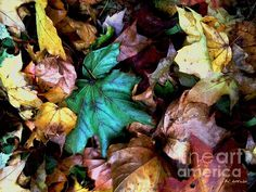 """""""Satin Leaves"""" ~ © 2015 RC deWinter ~ All Rights Reserved"""