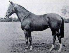Vienna(1957)Auerole- Turkish Blood By Turkhan. 4x5 To Friar Marcus & Blandford. Won 7 Of 22 Starts. $79,668. Won Prix d'Harcourt(Fr), Lyons Maid S(Eng)Twice, 2nd Coronation S(Eng)Twice, 3rd St. Leger S(Eng). Died In 1976.