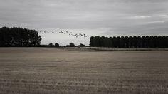 Agricultural landscape V