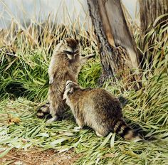 """""""Im Schilf"""" (In the Reed) 85 x 85 cm Silkpainting www. Wildlife Art, Painting & Drawing, Drawings, Raccoons, Artist, Cute, Animals, Pictures, Silk Painting"""
