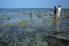 #NararaMarine National Park Narara Marine National Park, recognized by IUCN is degrading due to industrial activities and oil spill affecting the ecosystem. Now tell us your reviews about G'nY by giving 30 seconds of your valuable time: https://geographyandyou.typeform.com/to/EqGw6e