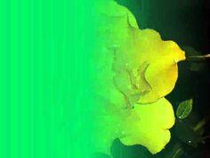 Édesanyámnak - YouTube Northern Lights, Nature, Youtube, Painting, Art, Art Background, Naturaleza, Painting Art, Kunst