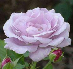 Beautiful color...