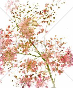 Pink Flower Blossom - Fotobehang & Behang - Photowall