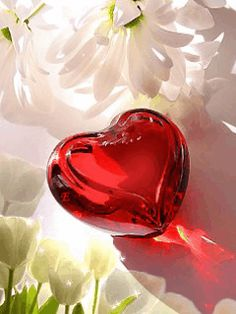 Let your heart be open to the light of love. All Heart, I Love Heart, Heart Art, Animated Heart, Animated Love Images, Heart Pictures, Shades Of Red, Happy Valentines Day, Heart Shapes