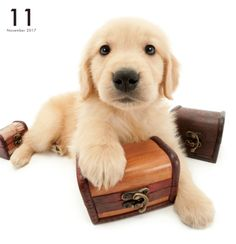 Artlist Collection THE DOG Golden Retriever calendar