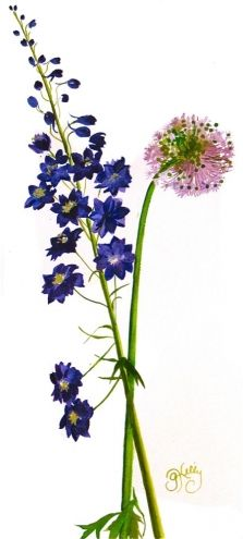 The Delphinium + the Allium by Gretchen Kelly, New York Artist, watercolor flowers, painting by artist Gretchen Kelly Watercolor Pictures, Watercolor Flowers, Watercolor Paintings, Watercolor Tattoos, Watercolors, Botanical Art, Botanical Illustration, Flower Tattoo Foot, Flower Tattoos