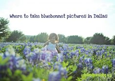 Best Local Dallas Spots for Bluebonnet Pictures!  It's a Dallas Tradition - you need this pin!  via www.dallasmomsblog.org