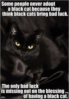Some people think black cats are bad luck. The only bad luck is missing out on the blessing of adopting a black cat. I love my black cat! Crazy Cat Lady, Crazy Cats, Beautiful Cats, Animals Beautiful, Hello Beautiful, Cute Cats, Funny Cats, Animals And Pets, Cute Animals