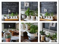 The weather was so nice this past week that I decided to put an indoor herb garden together on the sideboard in my breakfast nook.