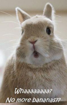 Bunny must have Banana !!!