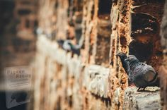 Pigeon, Land Scape, Best Funny Pictures, Insta Pic, Life Is Good, Canon, Racing, Vacation, Things To Sell