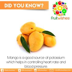 Hailed as the 'King of fruit' throughout the world, Mango also contains potassium. 100g fruit provides 156 mg of potassium while just 2mg of sodium. Potassium is an important component of cell and body fluids that helps controlling heart rate and blood pressure. ‪#‎Fruitwishes‬ ‪#‎MangoTrivia‬ Body Fluid, Heart Rate, Blood Pressure, Mango, Fruit, Food, Manga, Essen, Yemek