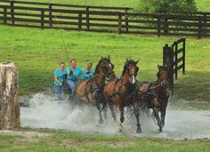 Oldham County's Hermitage Farm is serving as quite the prep site for the World Equestrian Games at Kentucky Horse Park [Sports] Kentucky Horse Park, My Old Kentucky Home, Horse Farms, Equestrian, Places To Visit, Horses, Games, World, Sports