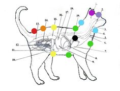 Animal Communication & Healing - Animal Chakra System