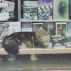 #cat #czak #mainecoon #beauty #bigcat #like_a_lynx #bookstore #booklover #bookstore_eureka #francuskastreet #bookstagram