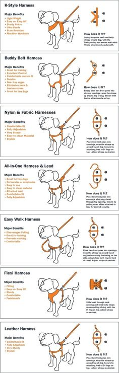 Dog Harness Types - Comparison between harness types to choose which is the best for your dog.