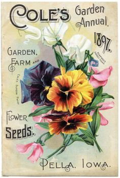 Sisters Warehouse: Vintage seeds packs... card seeds