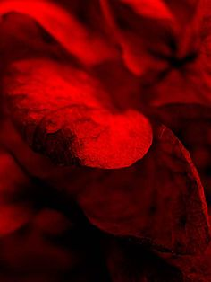 Title: #Leaves  #photography  by Jörg Schubert / schubertj73. Continue to experience exciting #art #photos on art blog: https://www.chanceforum.de/blog/   Titel: #Blätter #Fotografie von #Jörg #Schubert / #schubertj73.  Weiter spannende #Kunst #Fotos erleben auf #Kunstblog: https://www.chanceforum.de/blog/   #artphotography #makro #macro #artworks #fotograf #photographer #foto #photo #photos #abstractart #abstrakt #abstract #monochrome #monochromo #kunstfotografie #scharf #unscharf #art…