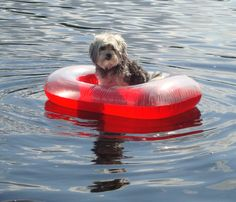 Little Gypsy lost at sea :)