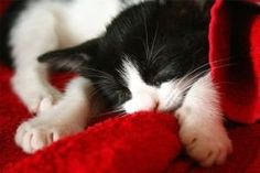 Słodki kot / Sweet cat #koty #cats #tapety #wallpapers