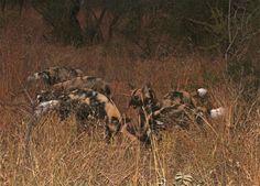 Nature Documentary   Savage Season - documentary discovery