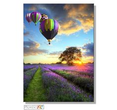Hot Air Balloons on a Lavender Field Canvas Wall Art Prints – canvaswallartprints.co.uk