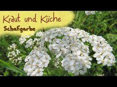 Schafgarbe   Pflanzliche Heilmittel - YouTube