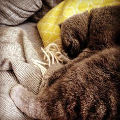Kurzer Nap und dann geht's weiter #cat #bkh #schlafen #catsofinstagram #urbanara #naptime @percman06