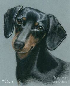 Grooming Tips for Dogs Basset Dachshund, Arte Dachshund, Dachshund Love, Animal Paintings, Animal Drawings, Animals And Pets, Cute Animals, Dog Portraits, Folk Art