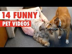 CORN KAT AND 13 MORE FUNNY ANIMAL VIDEOS! : Video Clips From The Coolest One