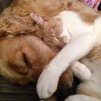 #dogalize Cani e gatti: problemi di convivenza tra i due animali #dogs #cats #pets