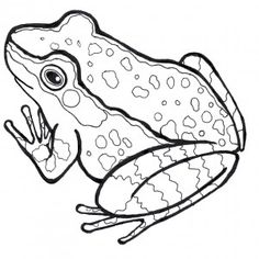 Froglife Downloads: Common Frog colouring in sheet. On our website you can find colouring in sheets free to download for all the amphibian and reptile species found in the UK. Illustrations by Sam Taylor