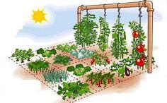 Como fazer uma horta em casa ocupando apenas 1 m²:
