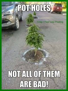 Your global source for the latest marijuana news in Along with the Best CBD products, and a up to date watch on weed legalization. Weed Humor, Weed Facts, Legal Highs, Smoking Weed, Adult Humor, Funny Posts, Humor, Funny Pics, Quotes