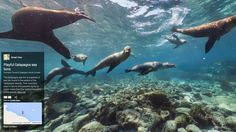 Google Street View Unleashes 360-Degree Tour of Galápagos Islands.  You can now tour the Galápagos, one of the most biodiverse places on earth, direct from your computer — with a little help from Google.