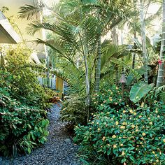 Attract Butterflies with a Mass of Wildflowers in a Tropical Garden