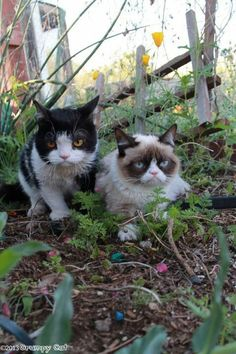 Pokey & Grumpy Cat