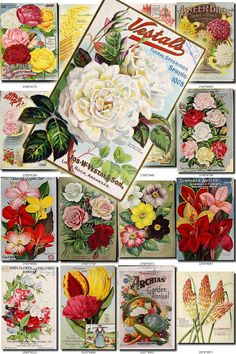 SEEDS-53 Catalogs Covers Collection with 92 vintage images pg077-Carnation, Vegetables.jpg078-Onion, Corn, Cabbage, Tomato, River, Cows.jpg079-Hydrangea, Raspberry, Currant, Blackberry.jpg080-Paeony.jpg081-Tulips, Woman with baskets.jpg082-vegetables, harves, flowers, frame.jpg083-clematis.jpg084-trollius japonicus excelsior.jpg085-tritoma hybrida express.jpg086-Nuts.jpg087-Nuts.jpg088-Lettuce.jpg089-Raspberry.jpg090-Turnip, Hairy Vetch, Clover.jpg091-Nar