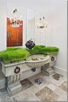 Having a party at your home?  Cover the counter with lush pots of wheat grass for an unexpected punch of color!