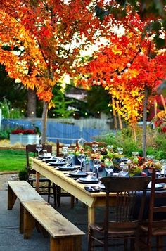 Dinner beneath the autumn trees!