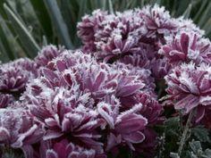 Wildflowers: Frosty Mornings