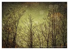 twilight trees forest art print  (thank you photoaddict for pinning!)