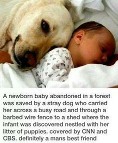 That is the SWEETEST story! What an amazing gift from God that dog is!