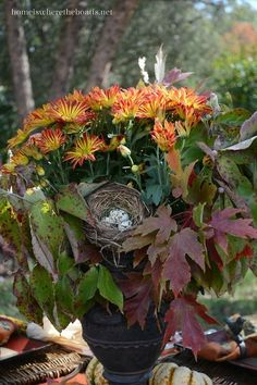 flowersgardenlove:  A 5 Minute Fall Cent Beautiful gorgeous pretty flowers