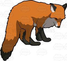 #animal #blacklegs #bushytail #canidae #canine #Cerdocyon #Darwinsfox #Dusicyon #flattenedskull #fourlegged #fourlegs #fox #fur #furry #hunt #hunting #Islandfox #longtail #look #looking #lookingat #lookingfor #Lycalopex #mammal #omnivore #Otocyon #perception #pointedsnout #prizedhunt #Pseudalopexfulvipes #search #sensing #uocyonlittoralis #uprighttriangularears #upturnedsnout #Urocyon #Vulpes #wil